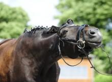 Lederqualität beim Pferd - Vorsicht bei Billig-Leder